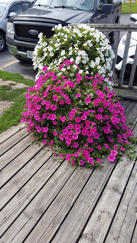 Flowers down the path Gananoque, ON