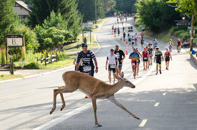 """Run Like a Deer"" Mont Tremblant, Quebec"