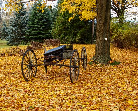 Fall in Caledon, ON
