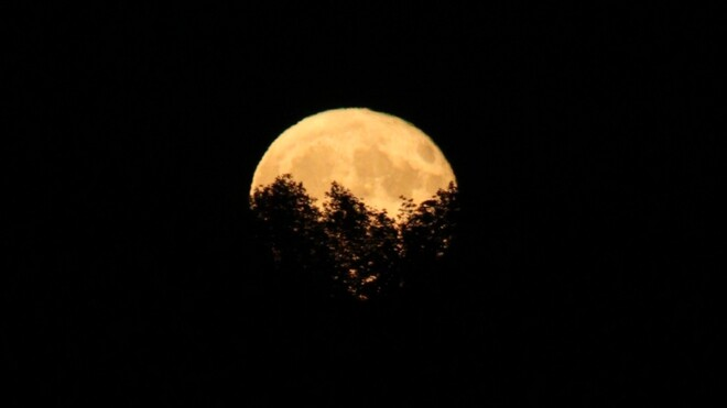 Harvest Moon Rising Grand Valley, ON