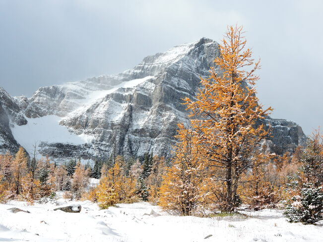 Image result for snowfall lake louise autumn
