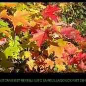 Le bel automne!