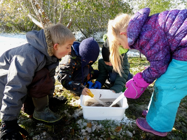 LEARNING ABOUT CREEK SCIENCE! Cranbrook, BC