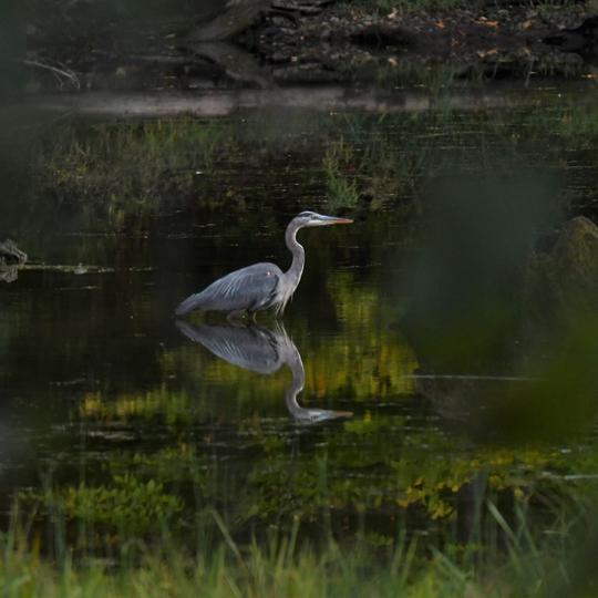 Tioga-Hammond Lakes