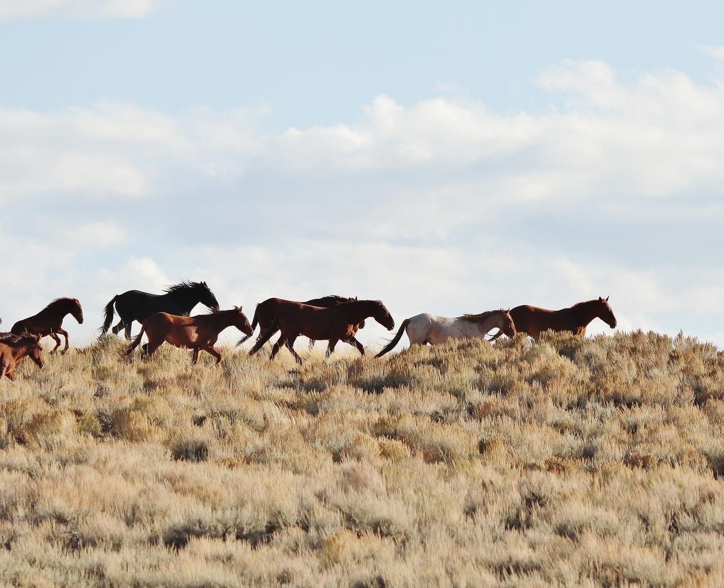 Pilot Butte Wild Horse Scenic Tour