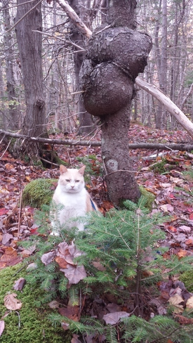 Cougar Kat is so rustic in the primordial woods. Sydney, NS