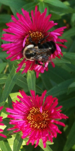 Busy bees North Bay, ON