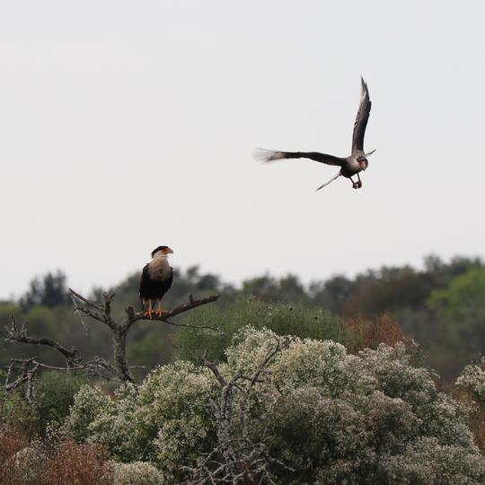 San Bernard National Wildlife Refuge