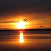 lever de soleil d'or