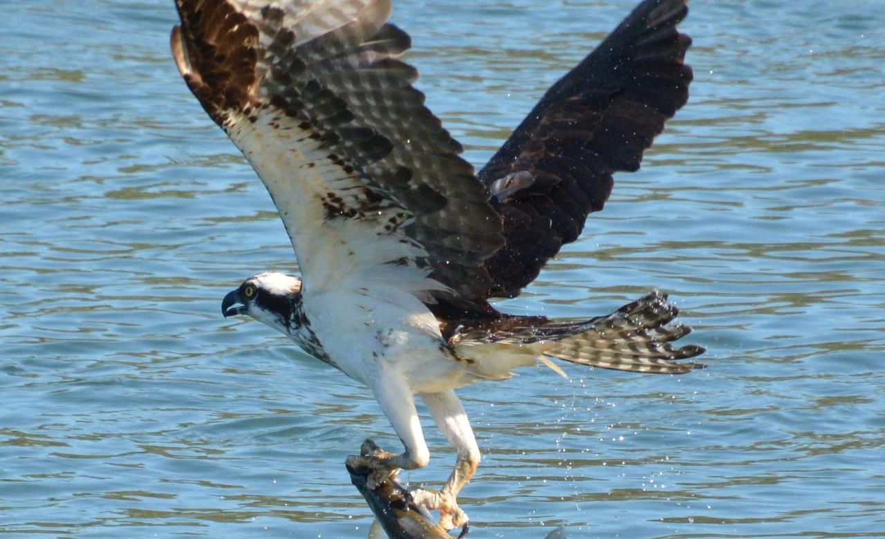 Successful catch!