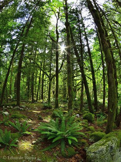 Sunburst in the forest!