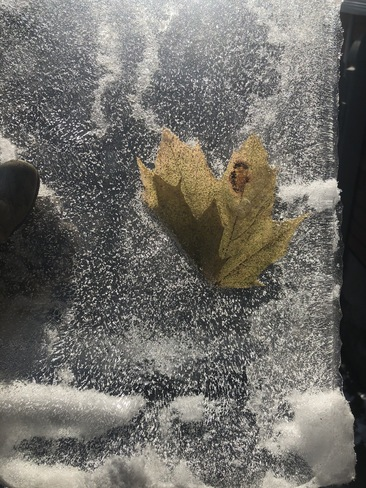 The Frozen Maple Leaf. Kingston, ON