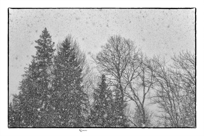 A snow filled day Magnetawan, ON