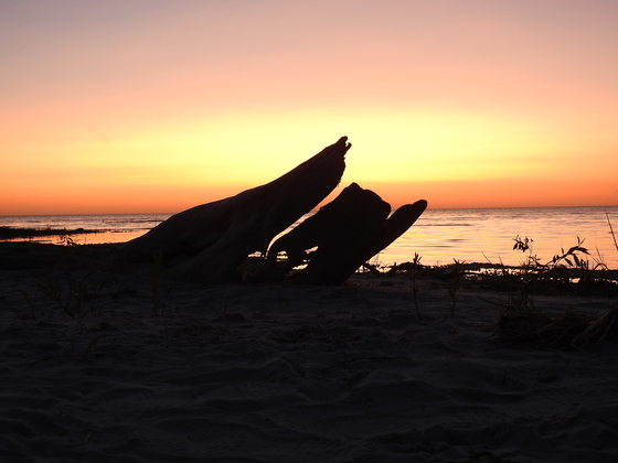 Sunset and Driftwood