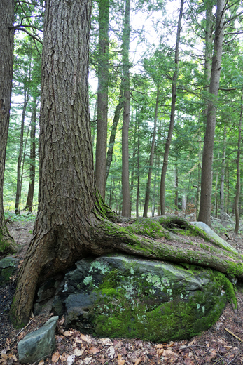 Tree Fingers