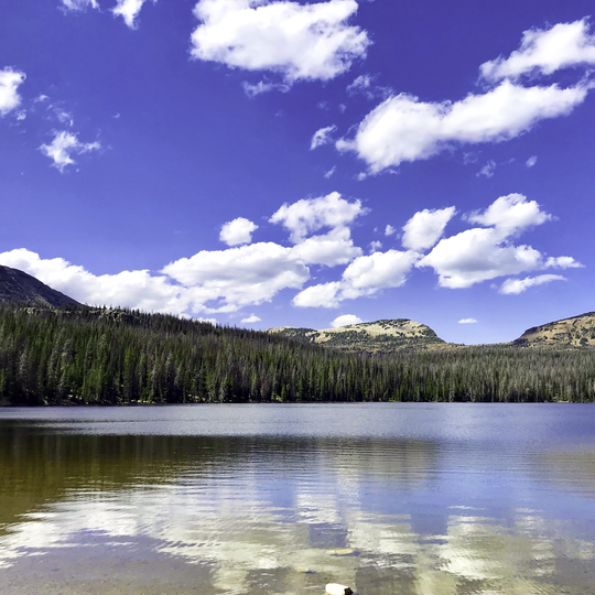 Uinta-Wasatch-Cache National Forest
