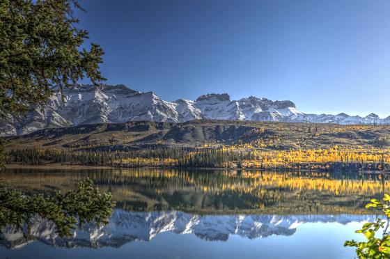 Larch tree reflection