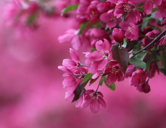 Glorios spring fragrance