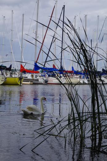 Among the yachts
