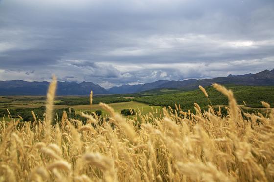 Where the prairies meet the mountains