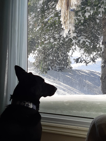 Watching the snow Elliot Lake, ON