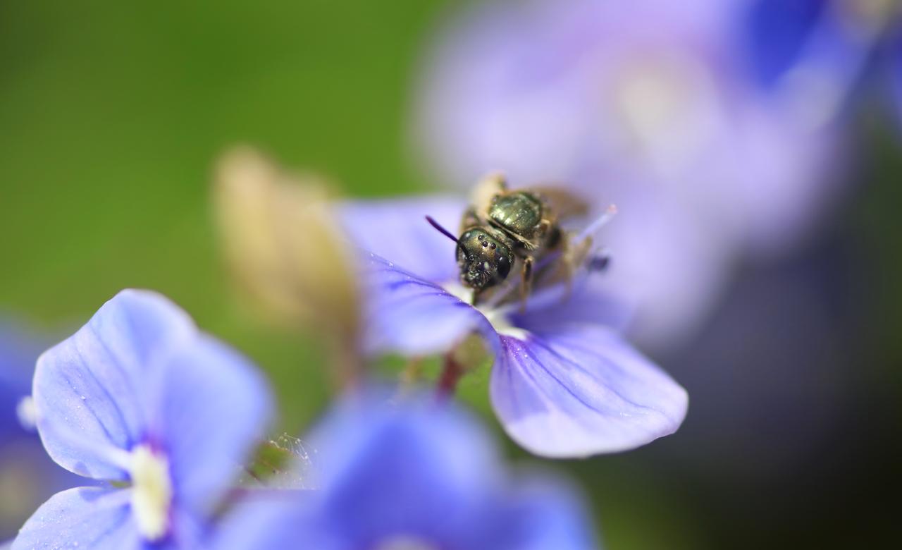 From petals to pollen