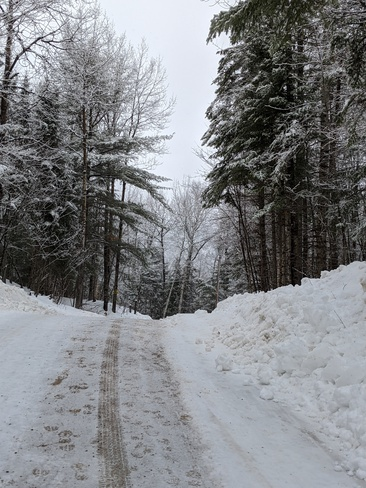 Walk after a wet snowfall... Labelle, QC