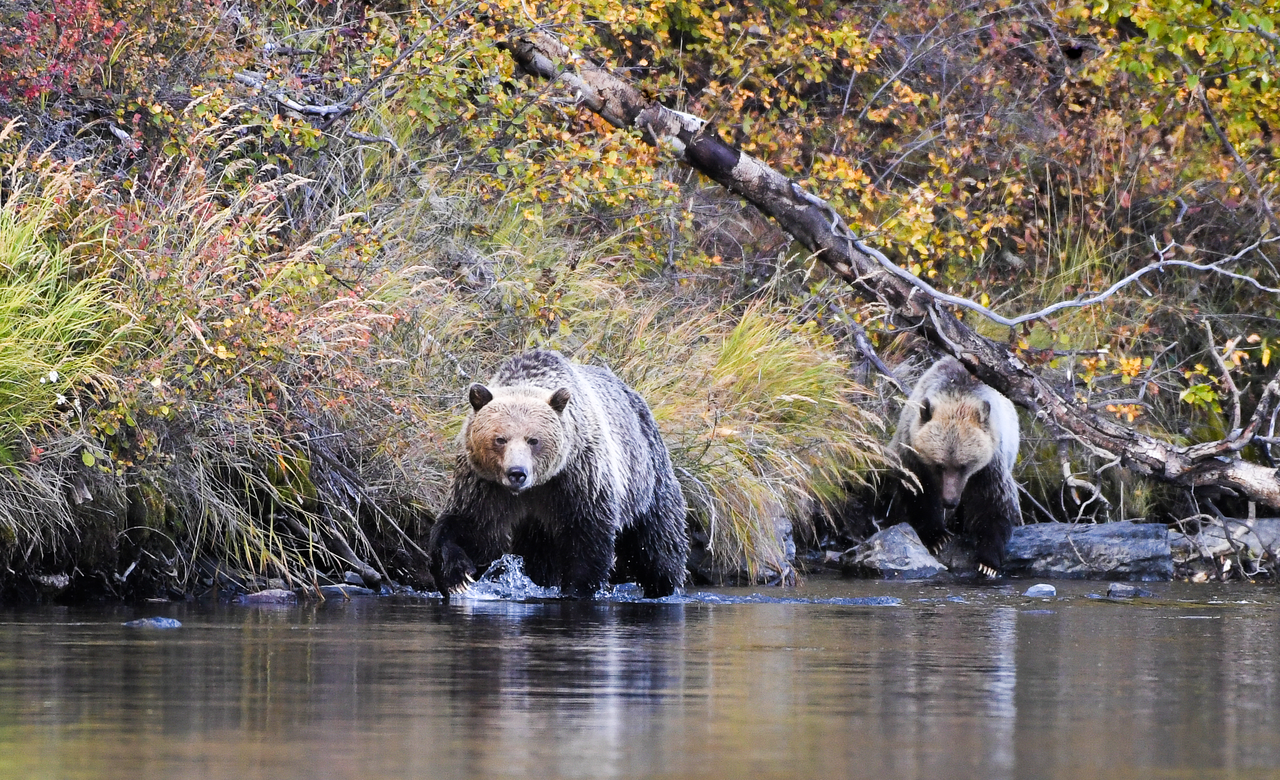 Searching For Salmon