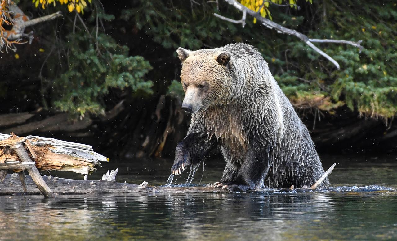 Ready To Snag A Salmon