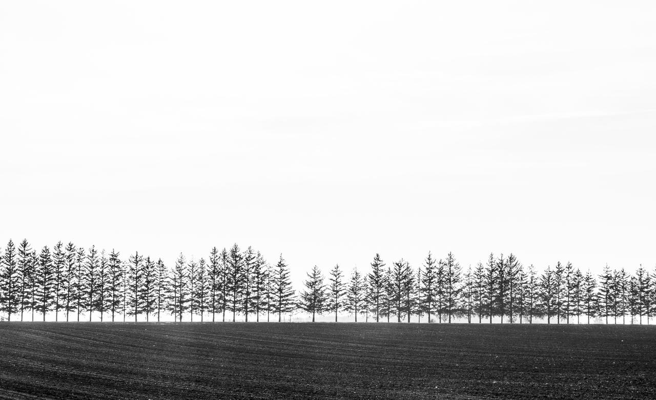 Tree line Huron County