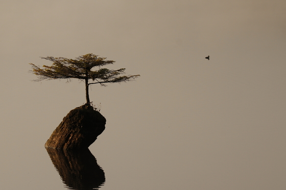 Lonely Tree and Duck
