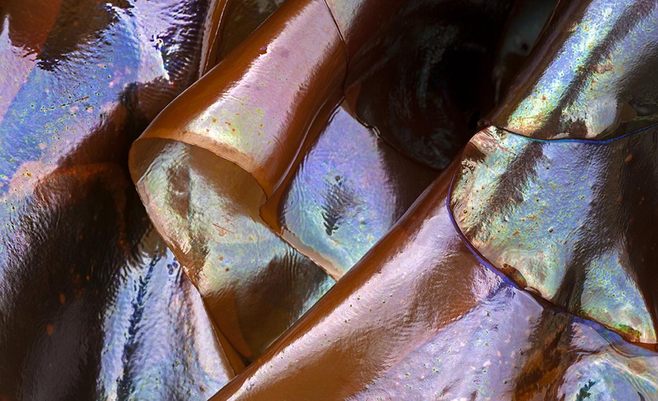 Seaweed's gift of irisdescence.