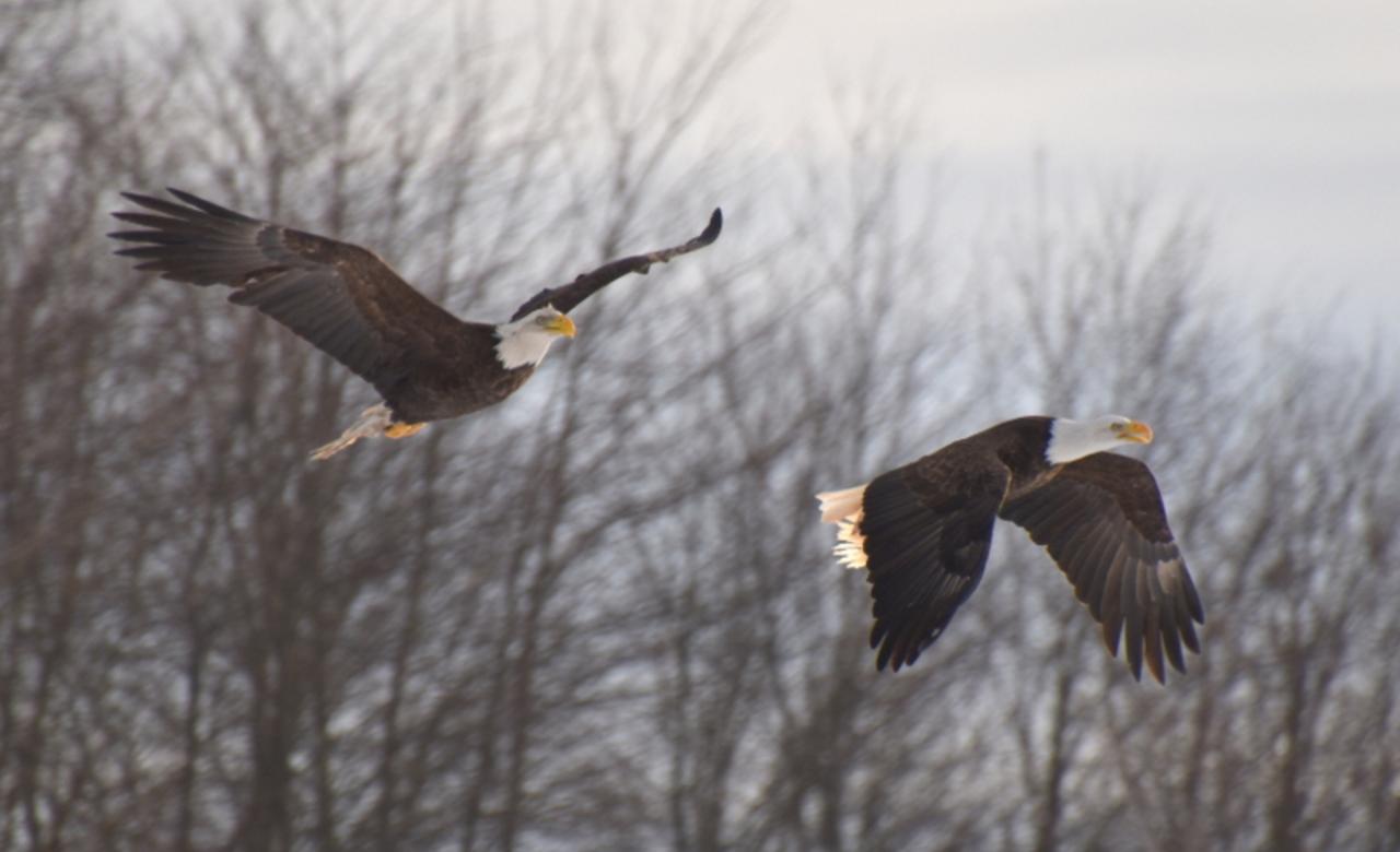 Flying pair