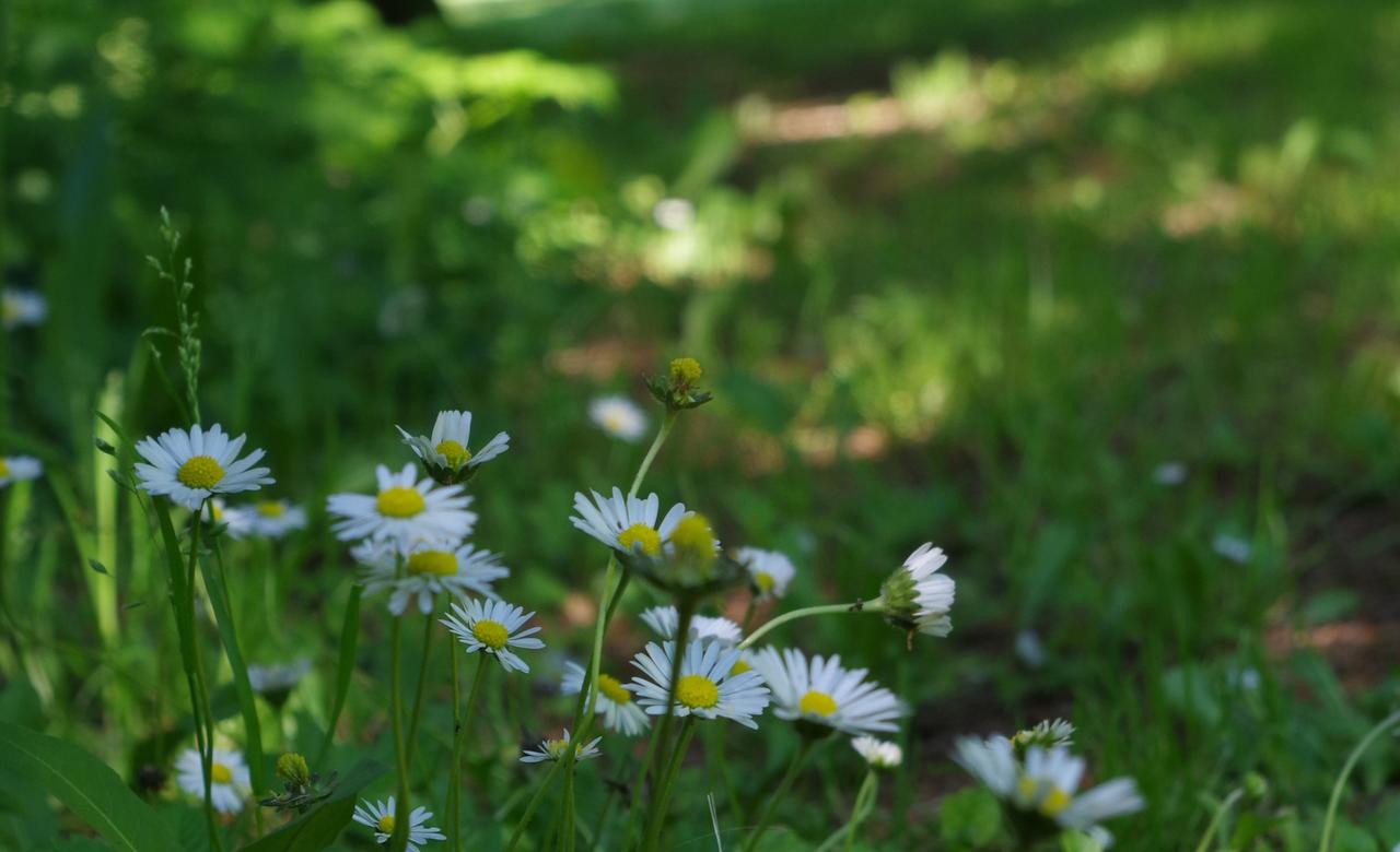 Wildflower summer