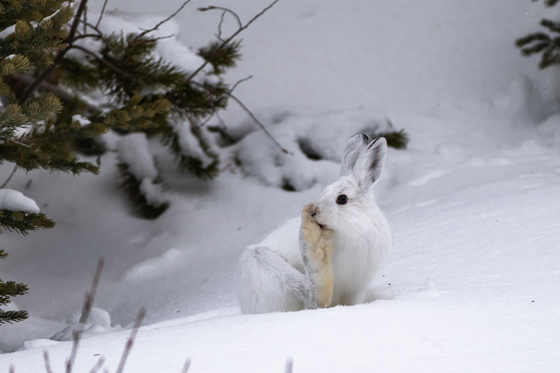 A Pause in the Snow