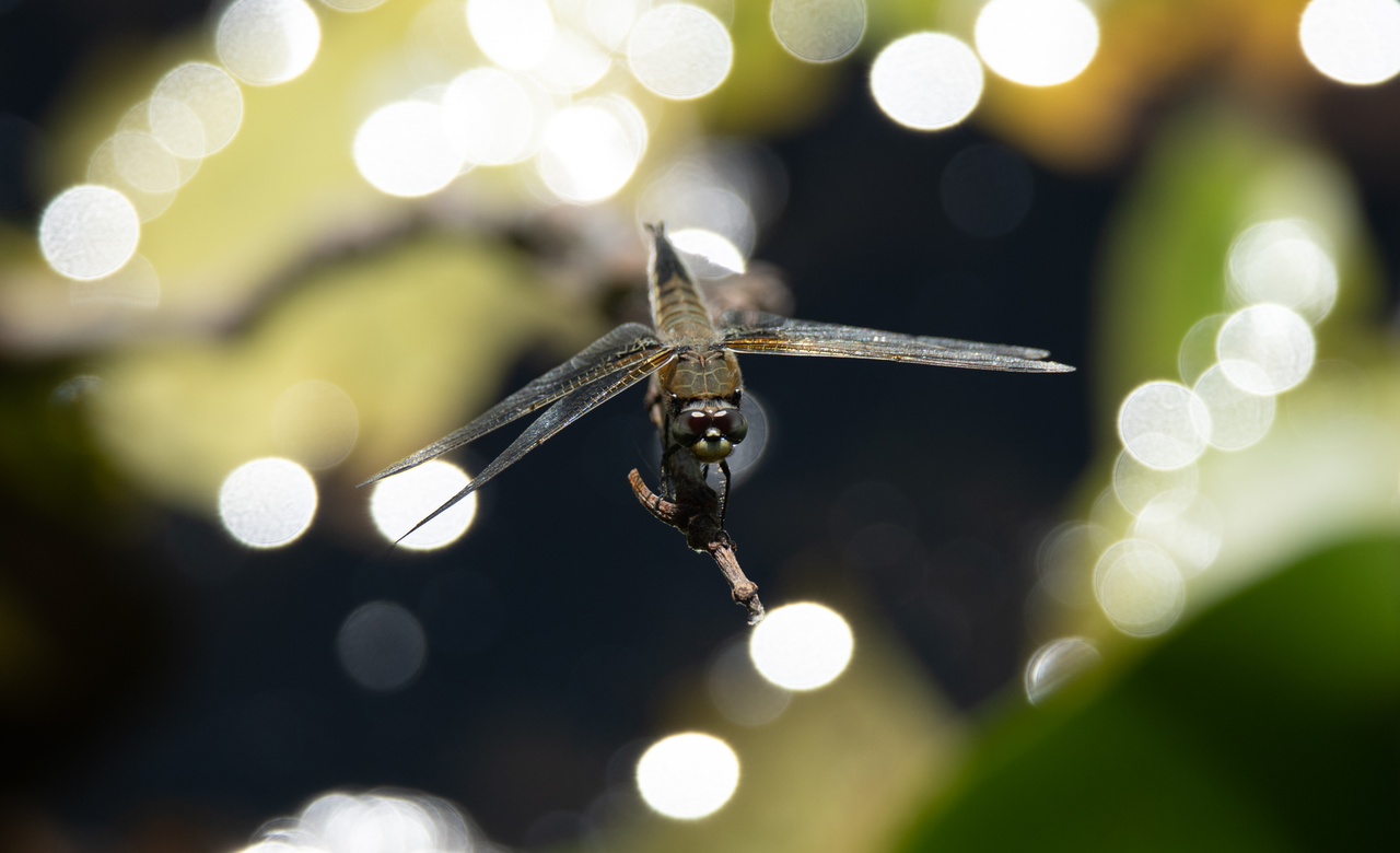 A dragonfly on a fairy lake