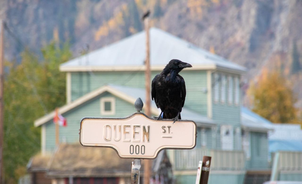 Raven on Queen