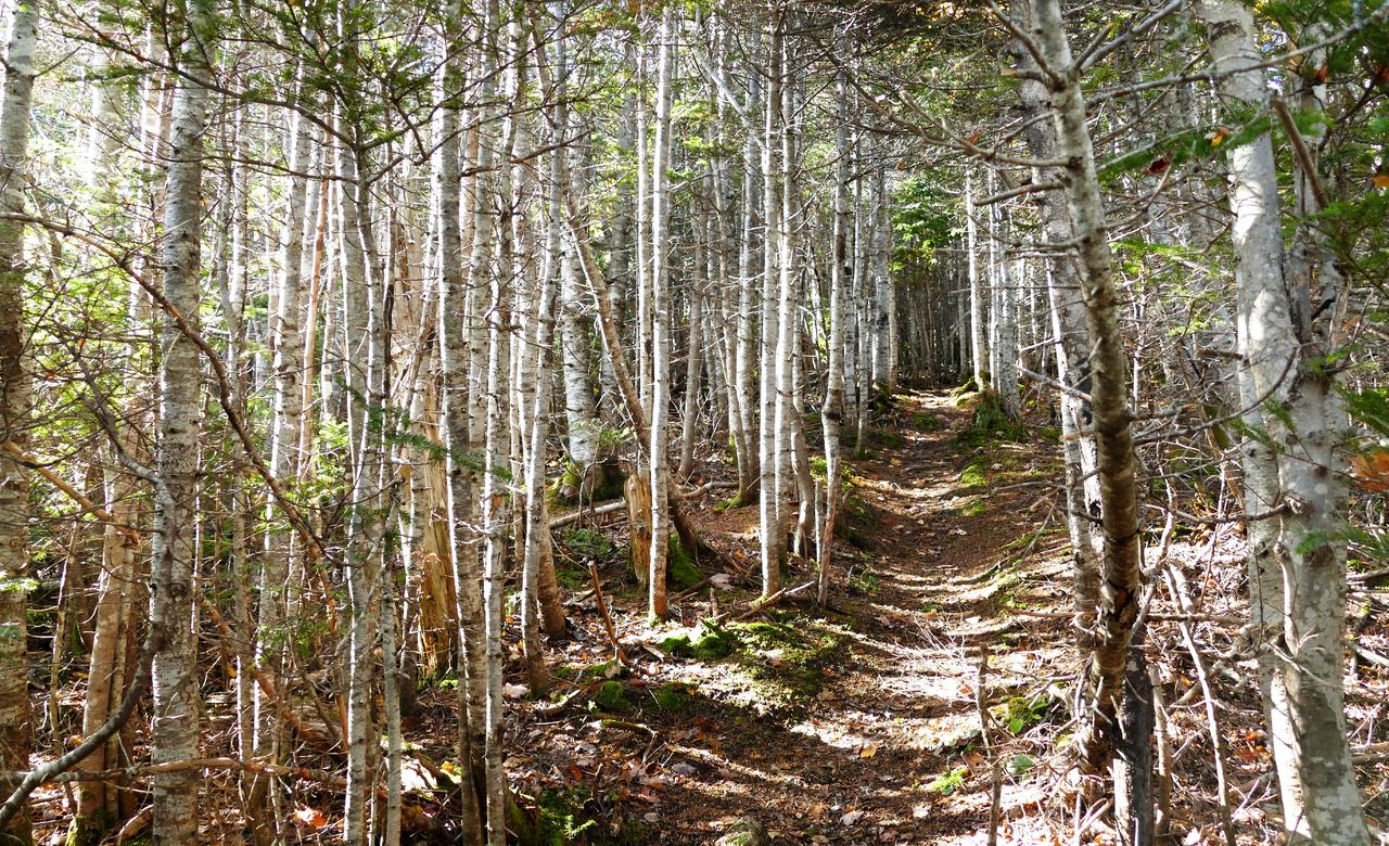 Forest Corridor