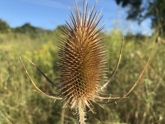 Fall Spike