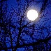Pleine lune dans la nuit!