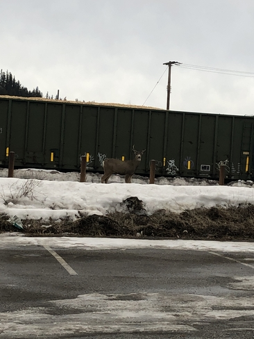Buck by Train by Nechako Bottle Depot in Prince George Prince George, British Columbia, CA