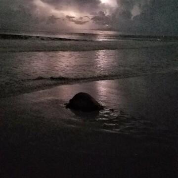 Thunder Turtle