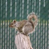 Écureuil!!!