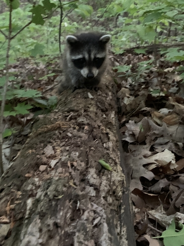 came across this little fella on our walk momma wasnt to far behind him/her London, Ontario, CA