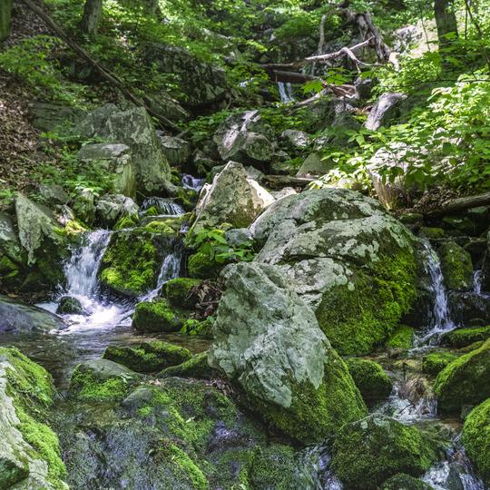 George Washington & Jefferson National Forests