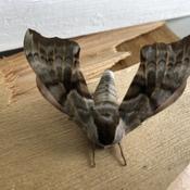 Bizarre de papillon