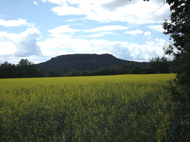 CANOLA FIELD 3821 ON-17, Murillo, ON P0T 2G0, Canada