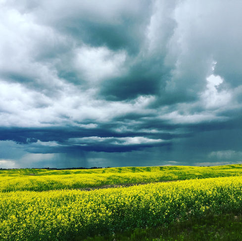 Thunderstorms and canola fields Rolly View, Alberta, CA