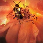 Pollen de lumière