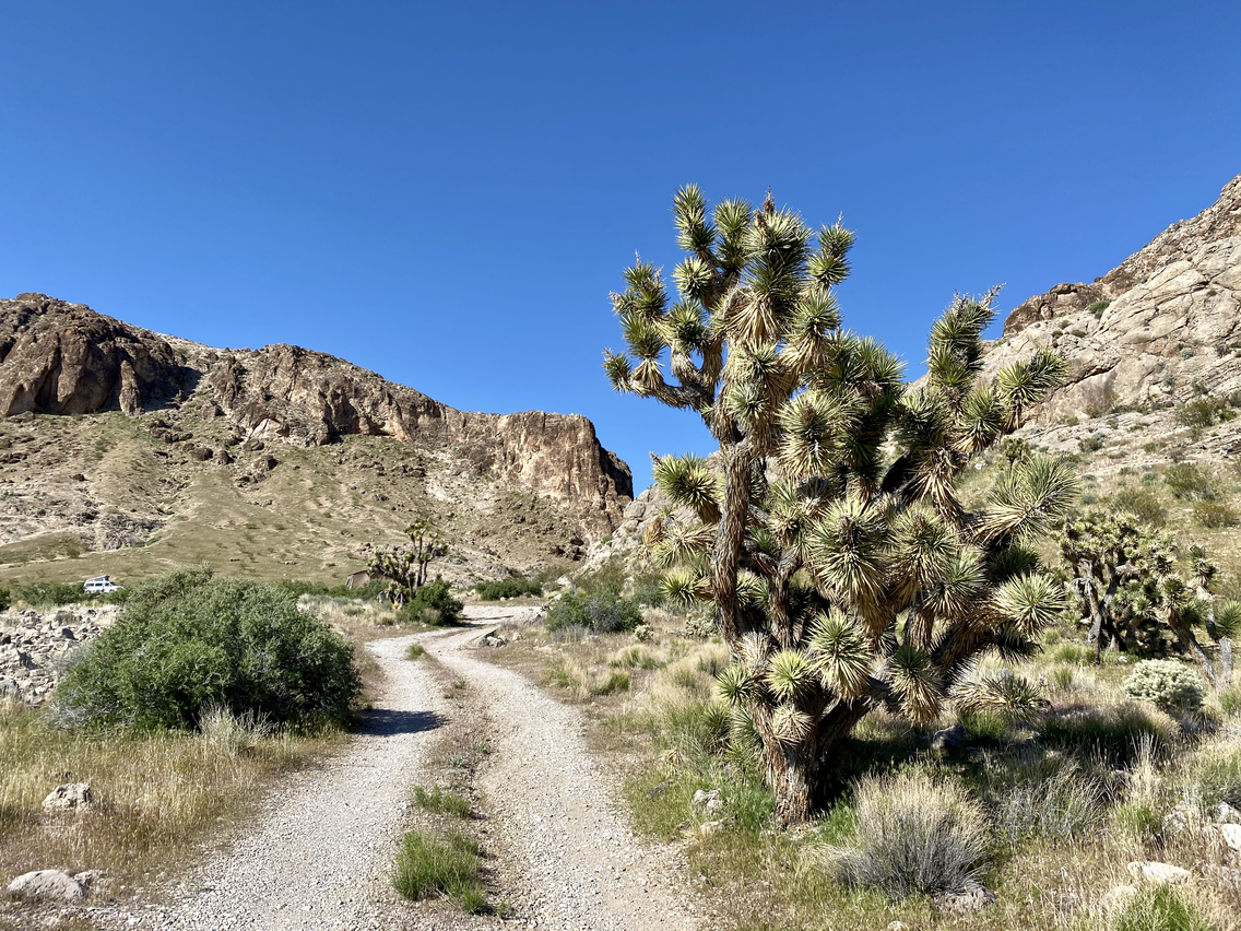 Mojave Desert Joshua Tree Road Scenic Backway